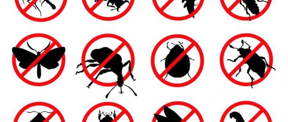 Pest Control Company Frisco TX