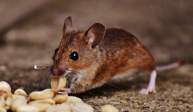 rodent eating nuts